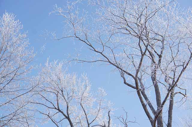 winter deciduous trees